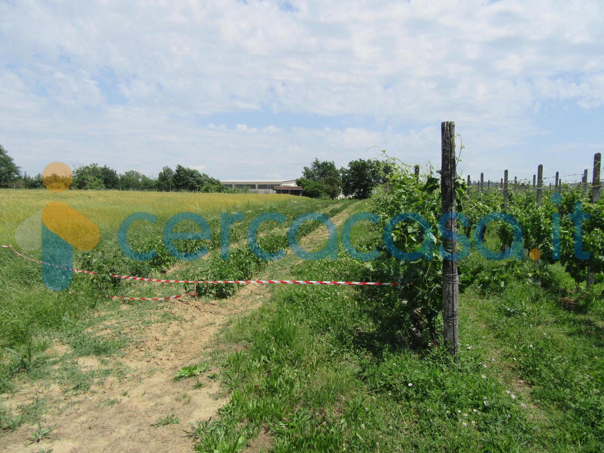 _castelnuovo-_bormida-__002d-_terreno